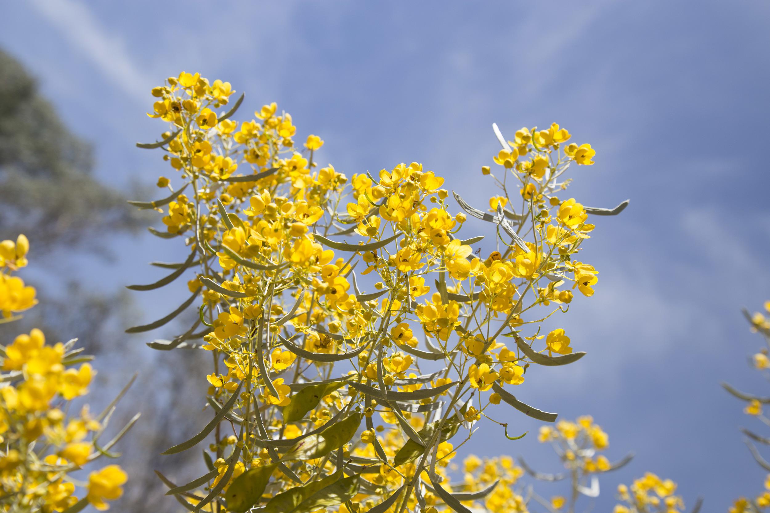 so many amazing floral frangrances