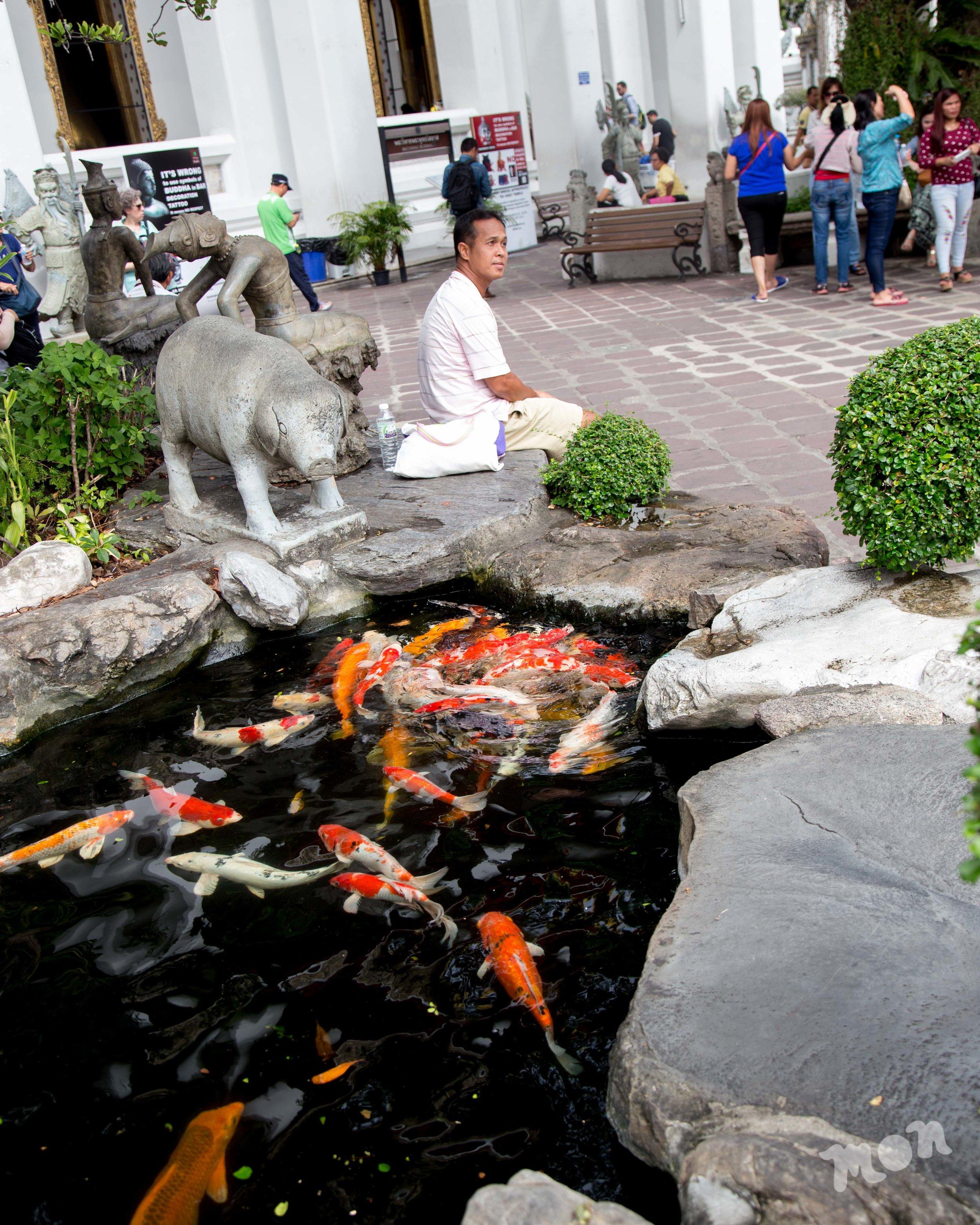 Koi Fish Pond at Wat Pho