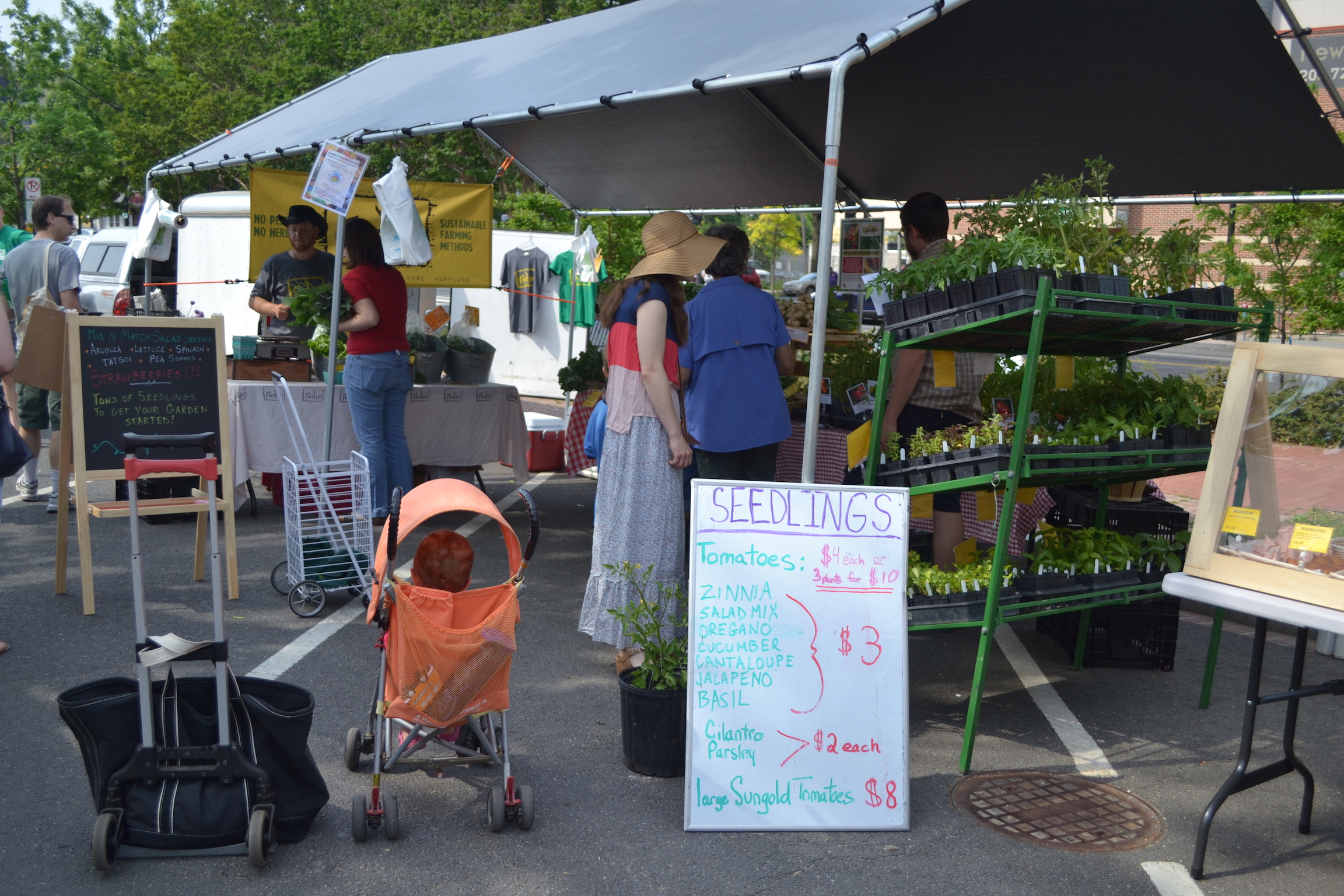 Radix farm is selling seedlings amongst other great veggies.