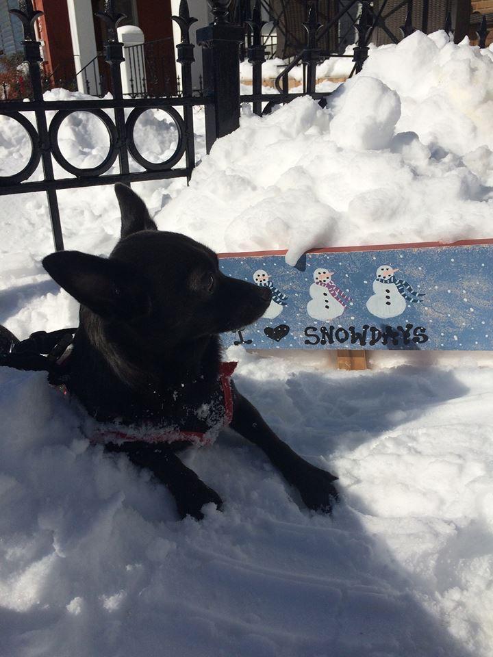 Burrito enjoying the snow days ( Photo: Anne Katz)