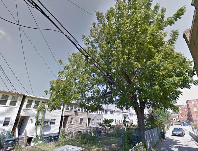 A black walnut tree in a neighbor's backyard