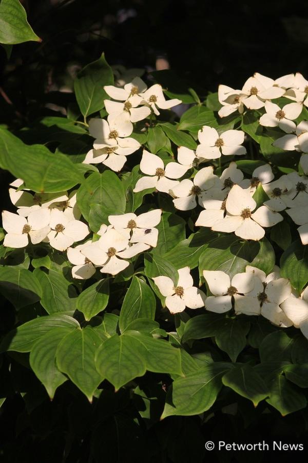 mayflowers5.jpg