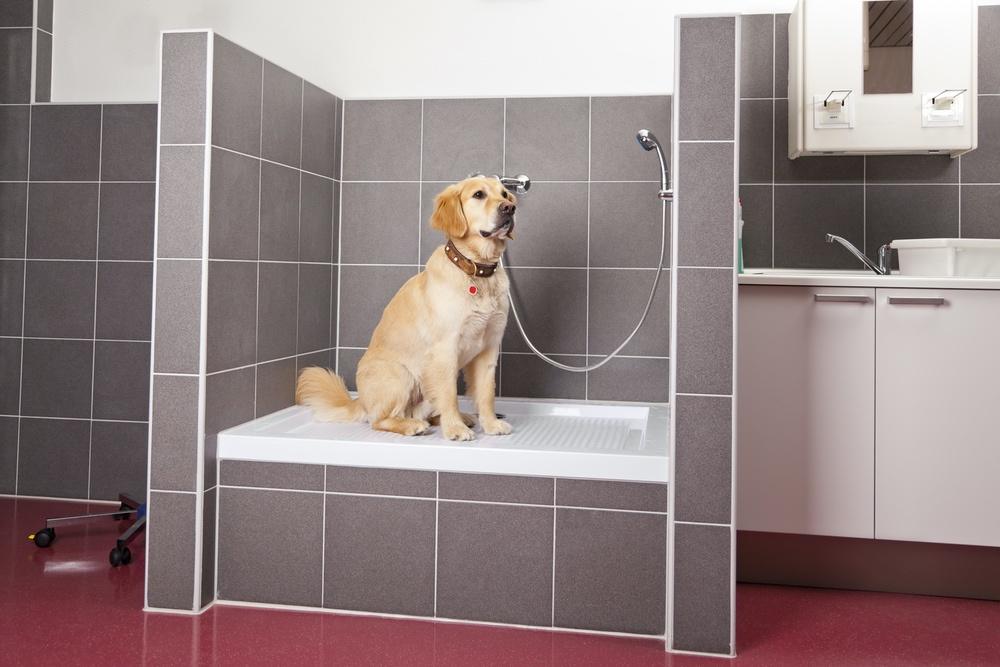 Dog Shower.jpg