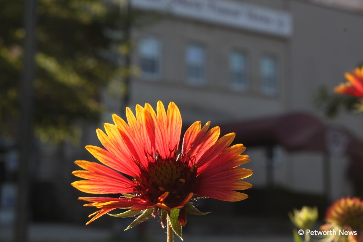 Indian Blanket on 9th Street.