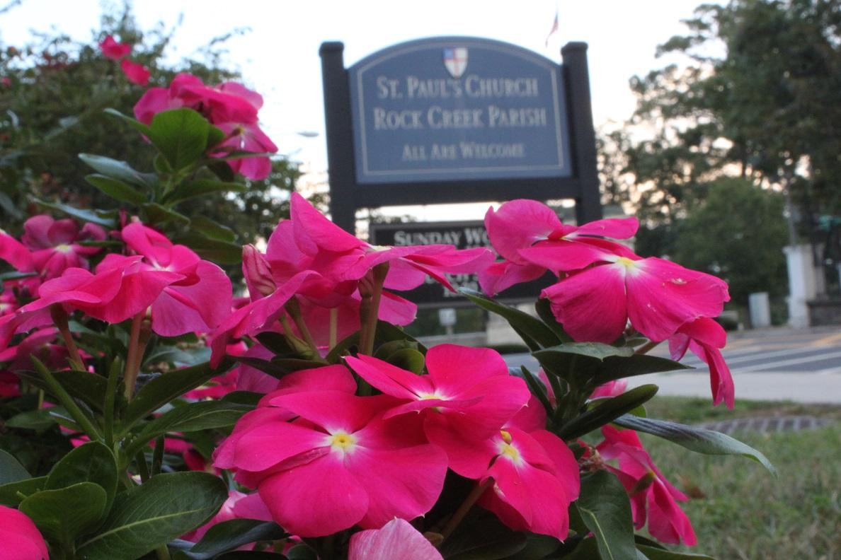 Vinca outside Rock Creek Church Cemetery on Webster Street NW
