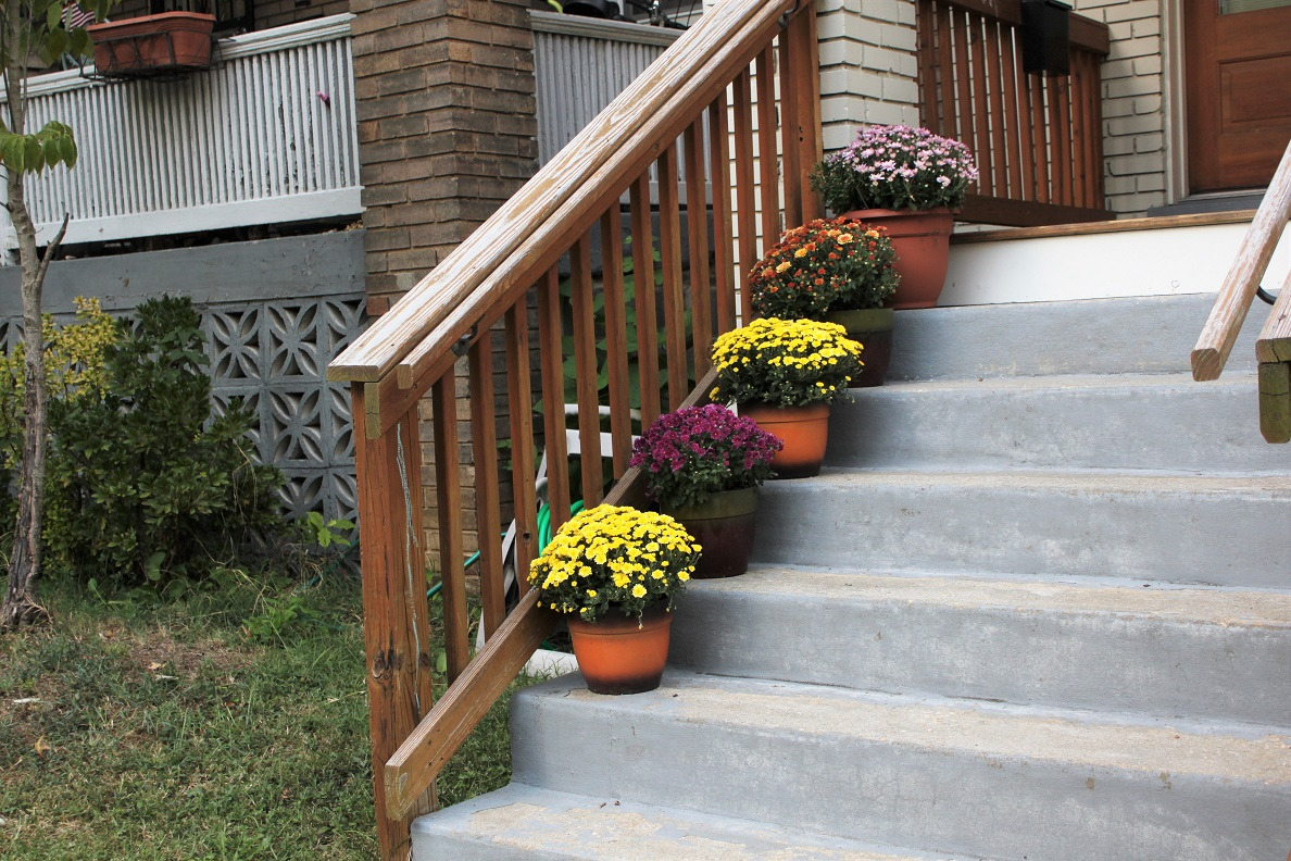 Mums lining porch stairs on 3rd Street NW