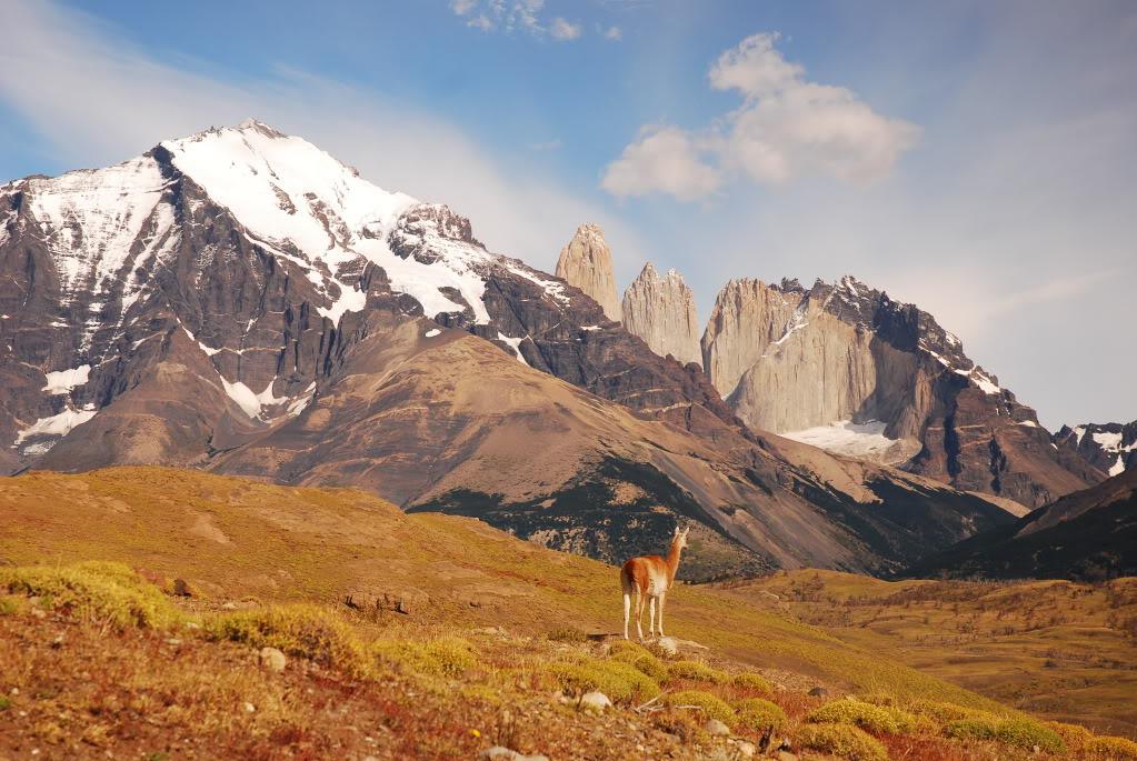Patagonia_alpaca.jpg
