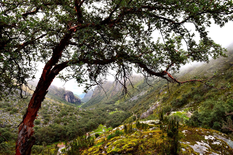 lares trees.jpeg