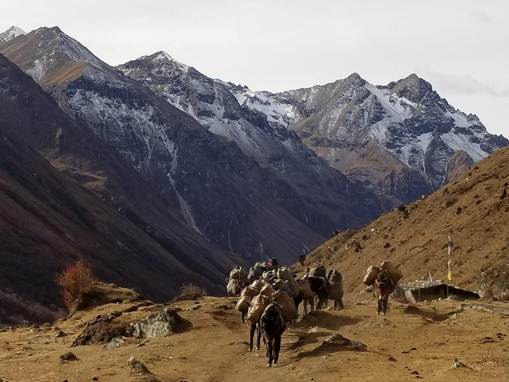 Bhutan pack animals.jpg