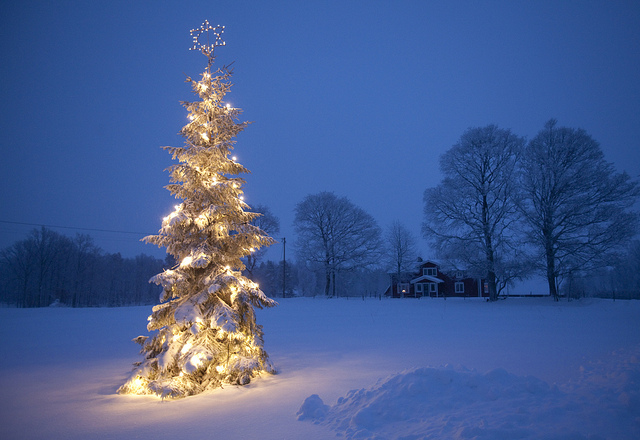 outdoor-christmas-trees-ssnyqdjih.jpg