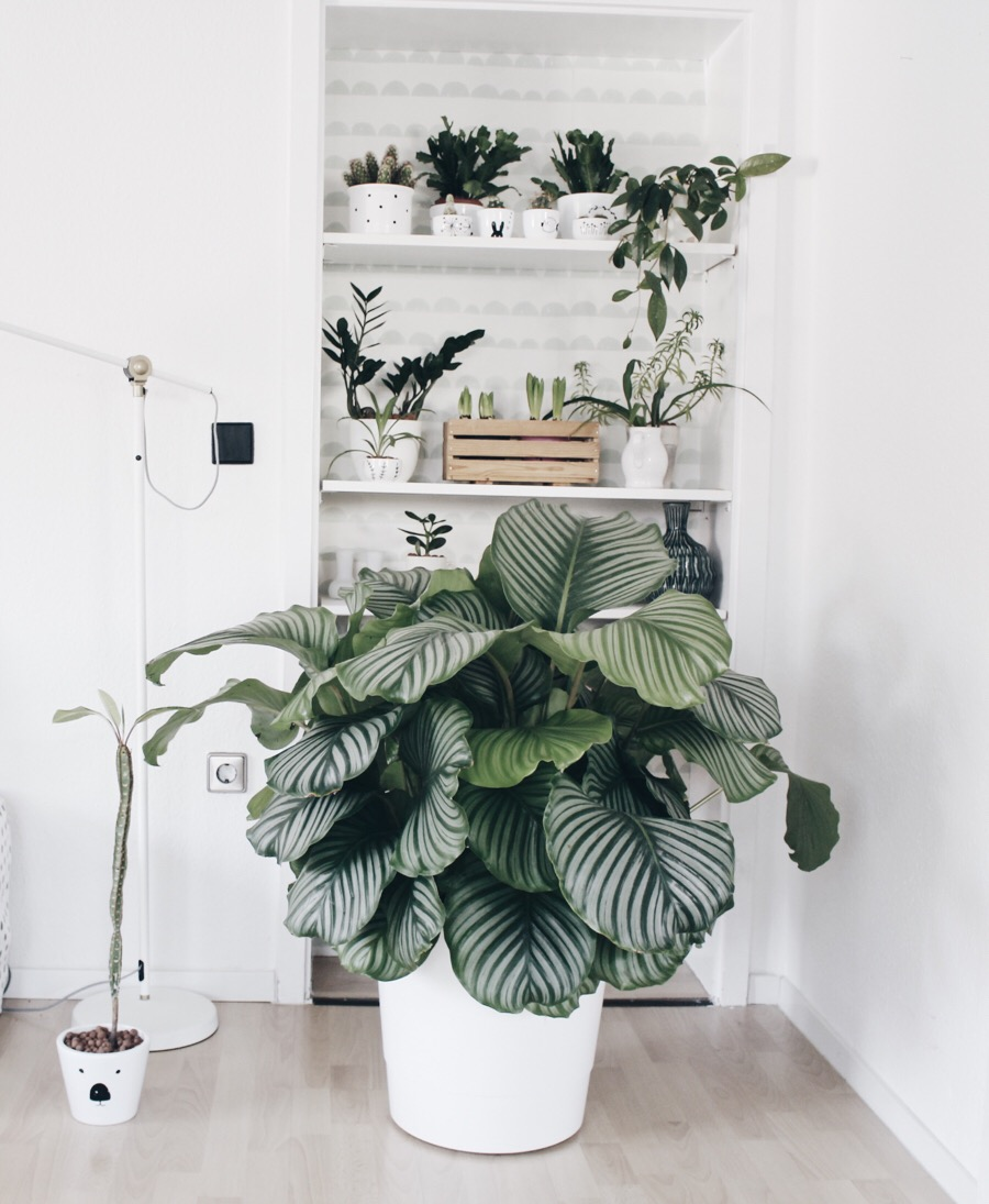 pattern-indoor-plants-decor-trends