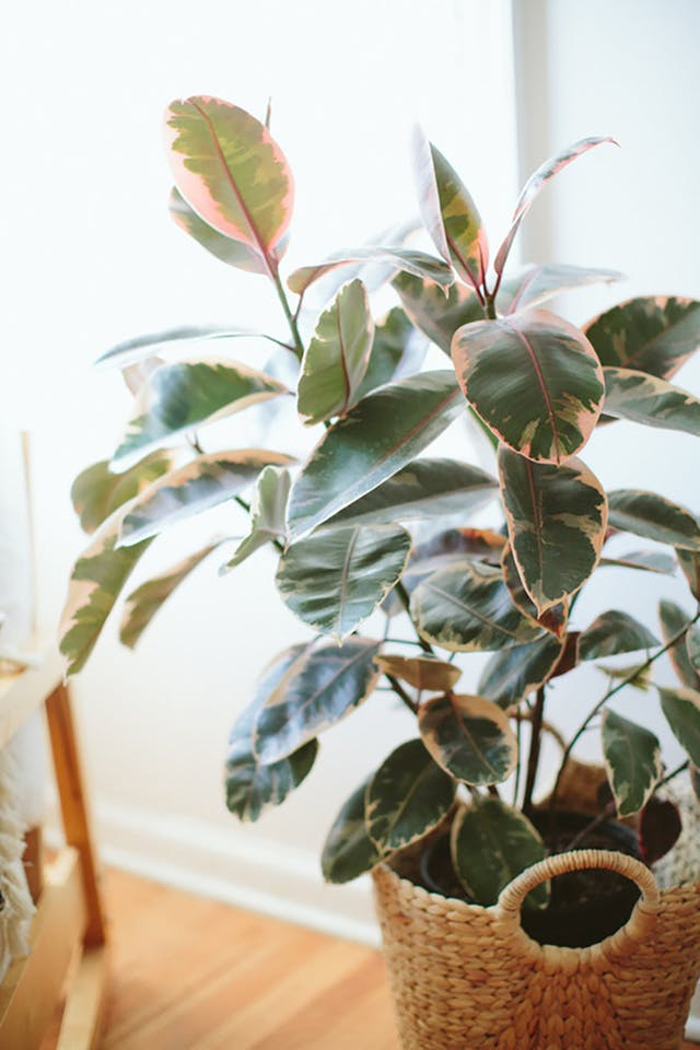 pattern-leaf-indoor-greenery