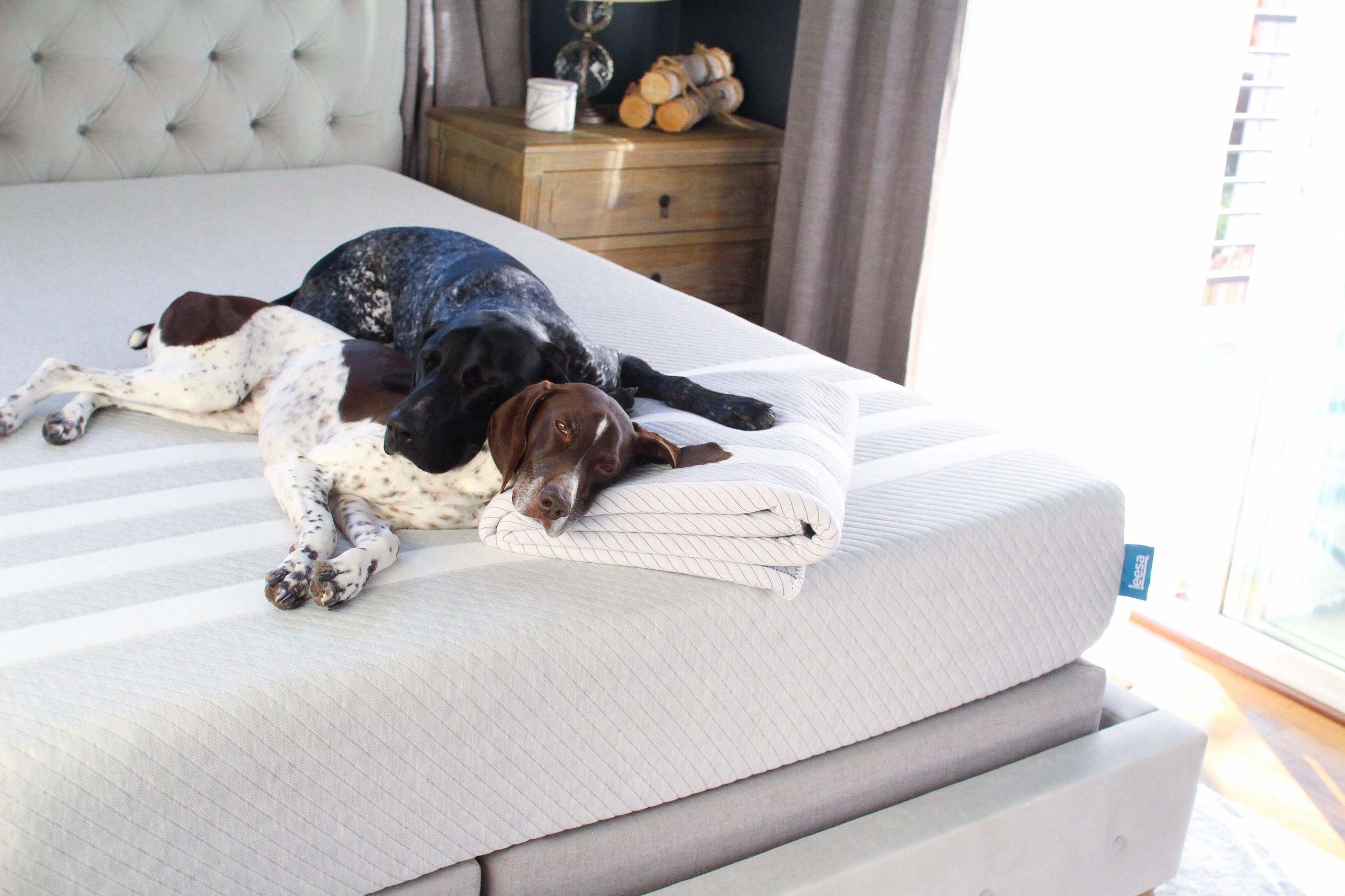 leesa-foam-mattress-bed-review