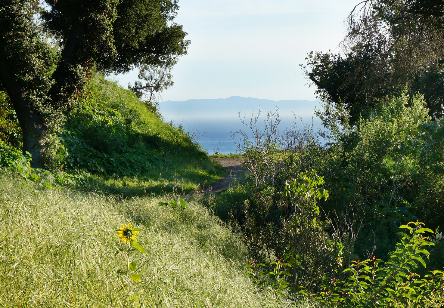 FEATURED LISTING - 981 Coyote Road