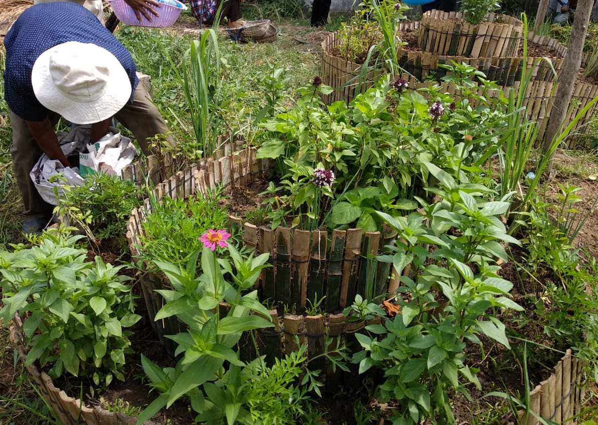 Bamboo circle garden with basil, lemon grass, zinnia, chives, and more, 2019.03 workshop.JPG