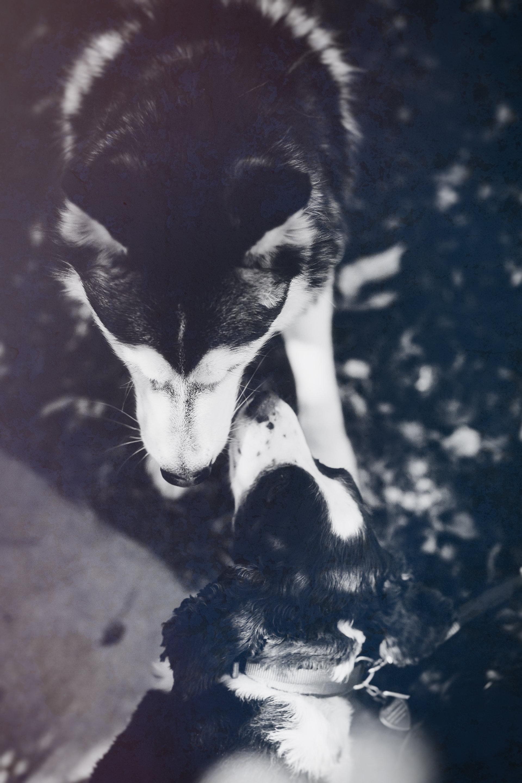 ANIMALBLESSING120.jpg