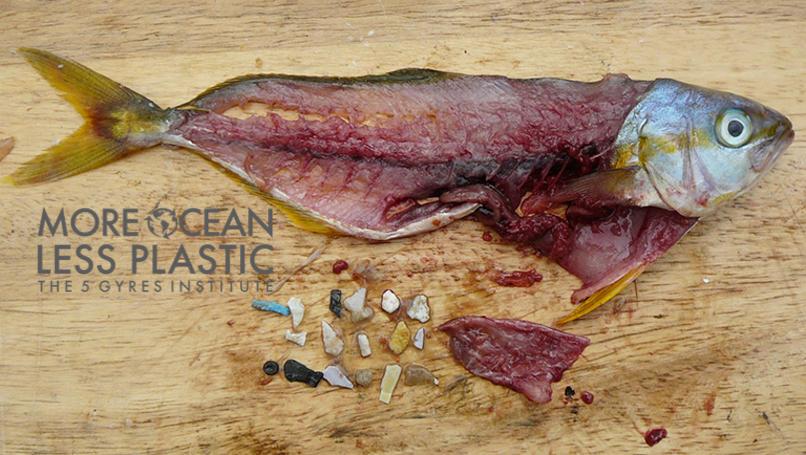5gyres-microplastic-fishswatermarked.jpg