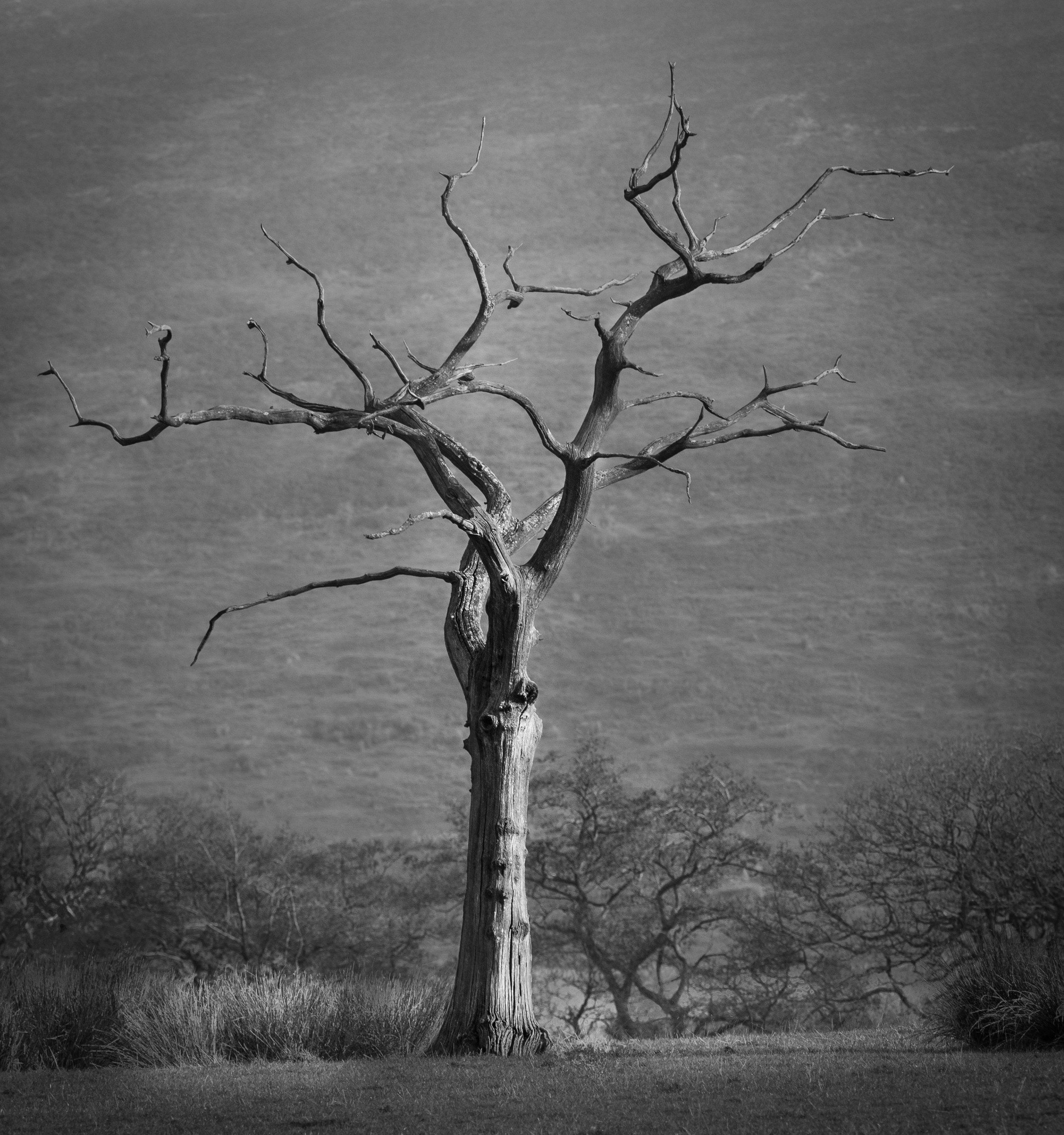 Lone Tree Trough of Bowland.  strong winds