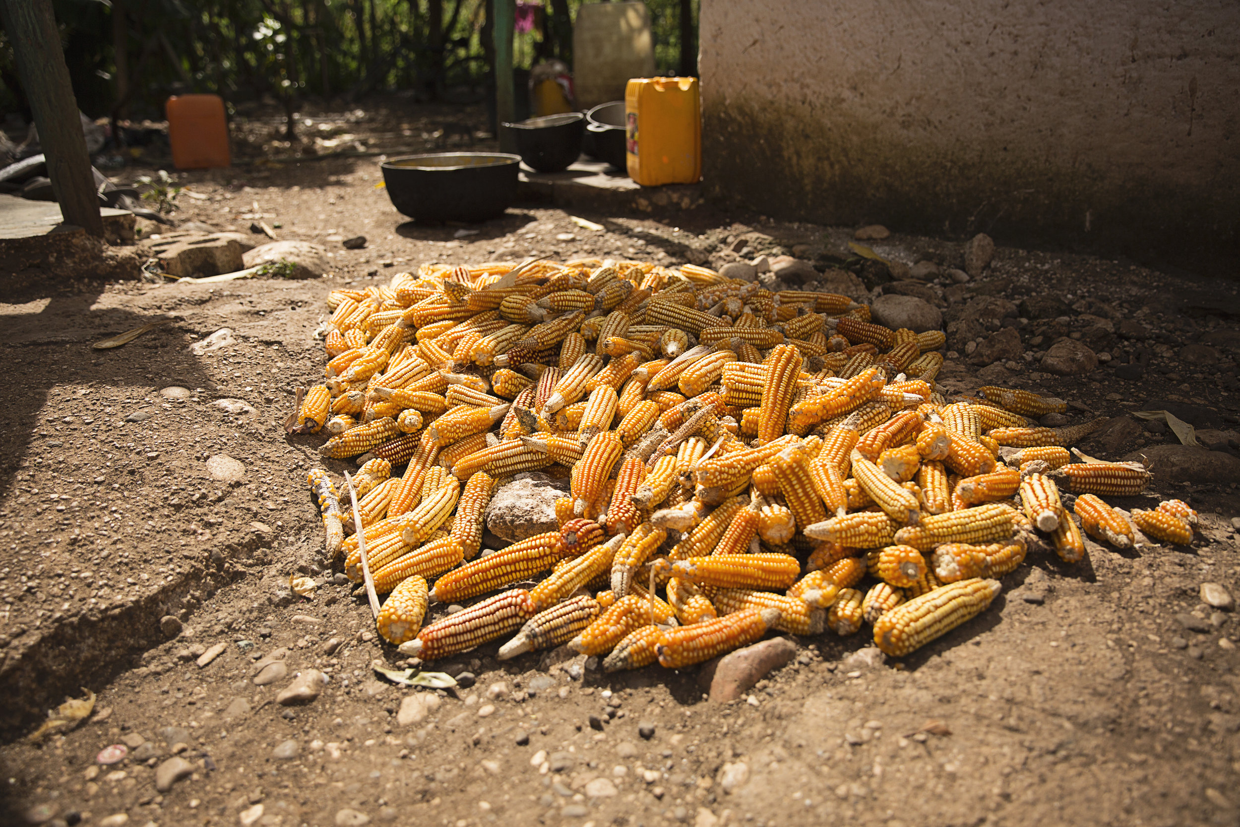 Being headquartered in Indiana, we're very familiar with corn. On our last trip, seeing these ears piled up in the Haitian market reminded us of home!