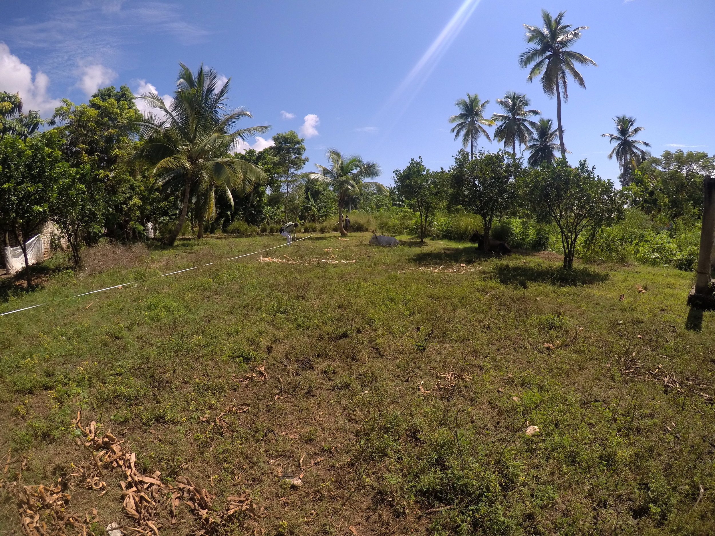 The Haitian contractors measured the perimeter of our land this week as they prepare to build the security enclosure. One day, this will be the view from our safe house!