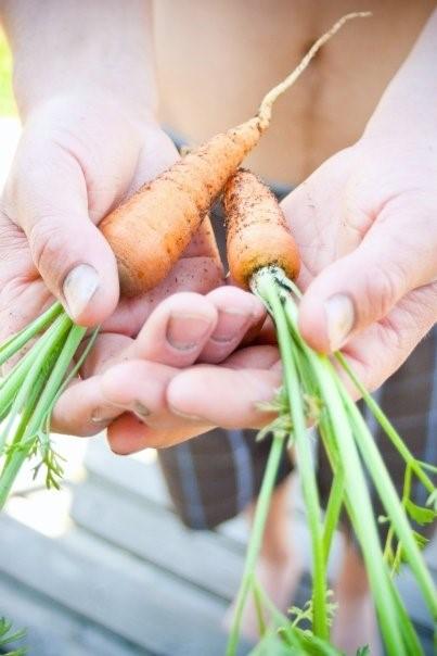 Carrots straight from the garden. Photo by Ashley Bennett Belka of Bennett Belka Photography