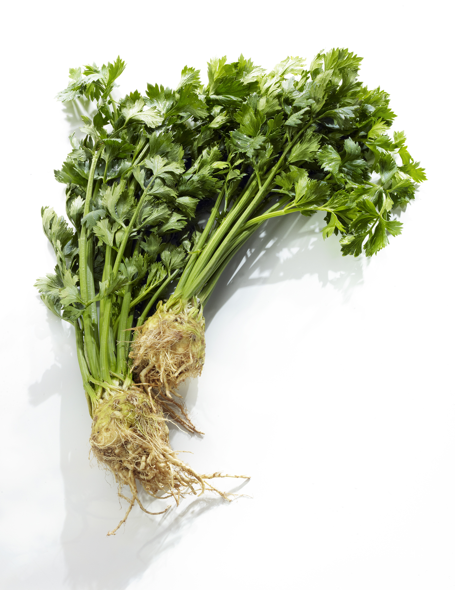 Celeriac Roots  Photo by David Bishop