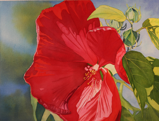 red-hibiscus.jpg