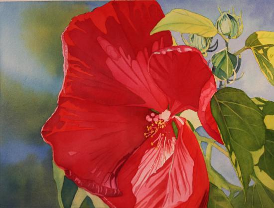 red-hibiscus.jpg