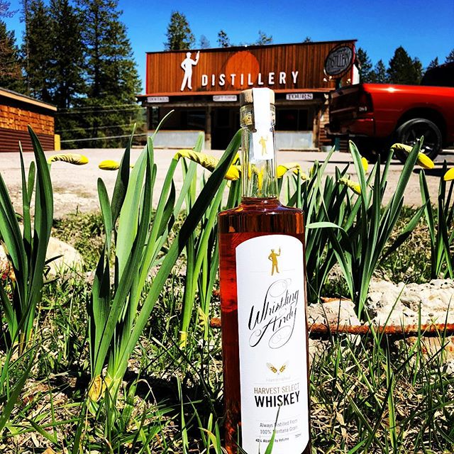 The #Flowers are opening!  And #WhistlingAndy is already open!  Drop by after work today and treat yourself to a #Montana grown #CraftSpirit