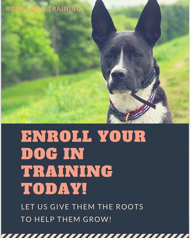 Leash manners courses now available! Contact Samantha for more information or stop by!  Email: Hello@rootsdogtraining.com  Call or text! 774-322-9151