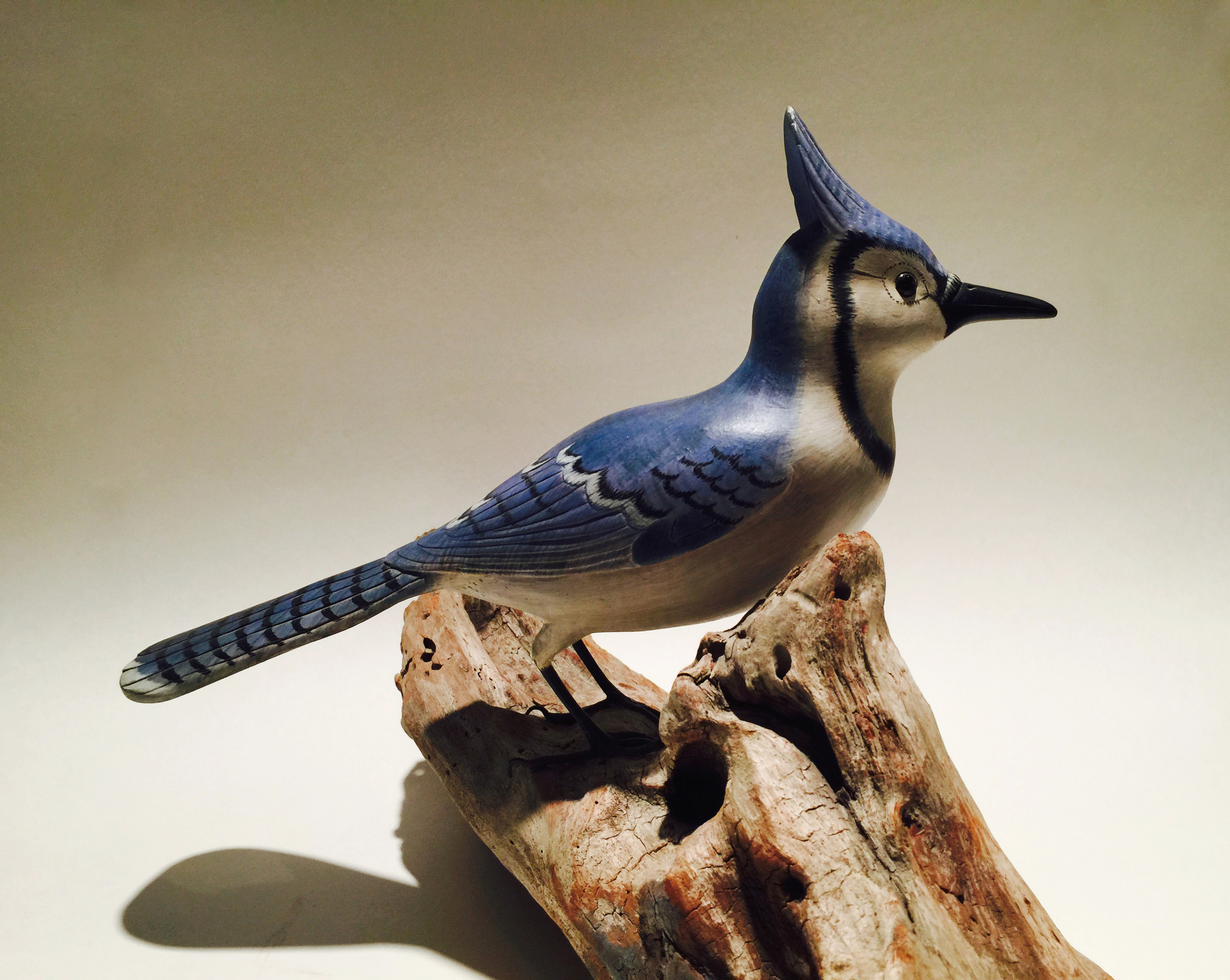 Anonymous  Bluejay,  c. 1980