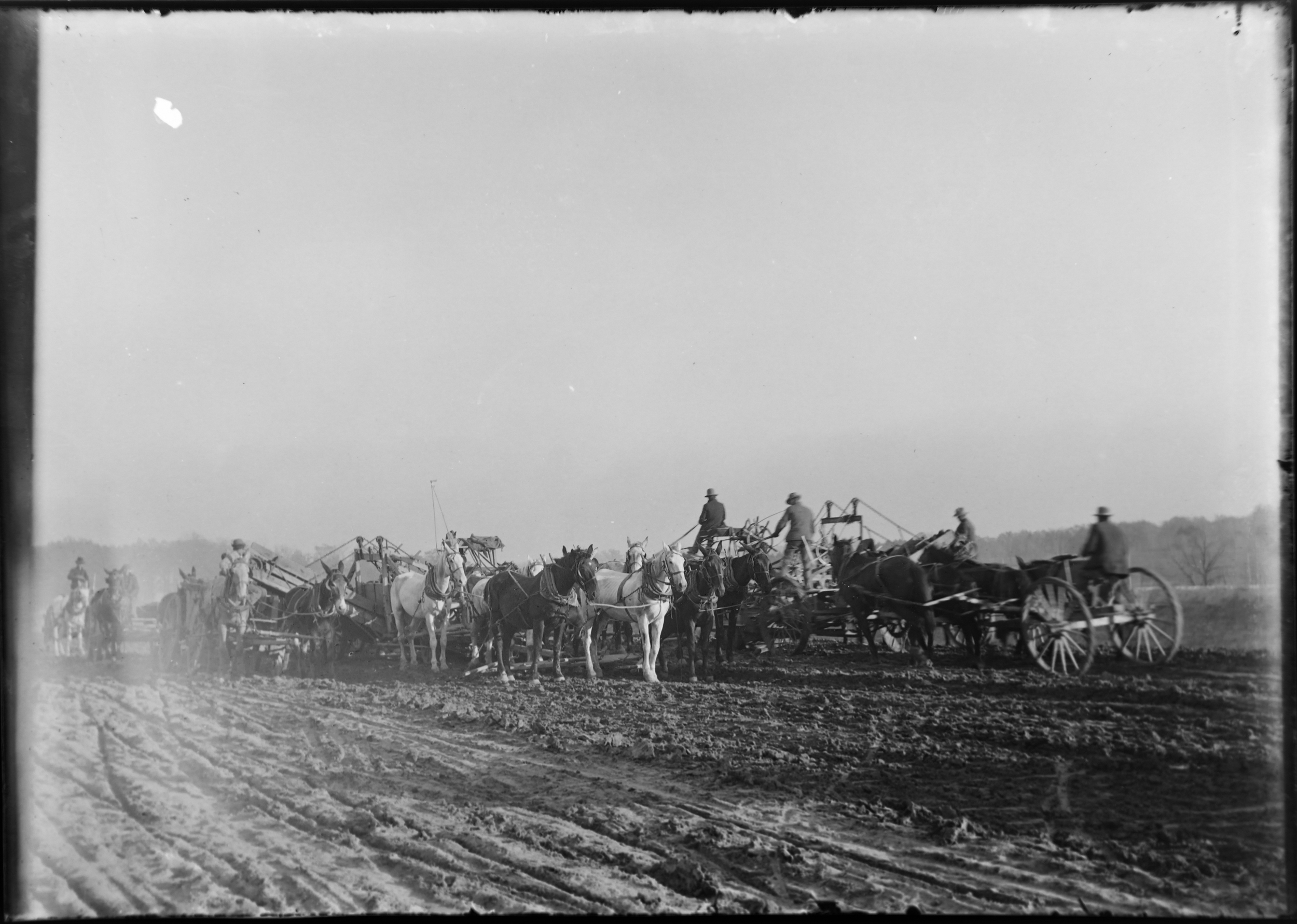 A team of horses grade the land for the coming construction of the 1904 World's Fair.  Photo c. 1901-2.