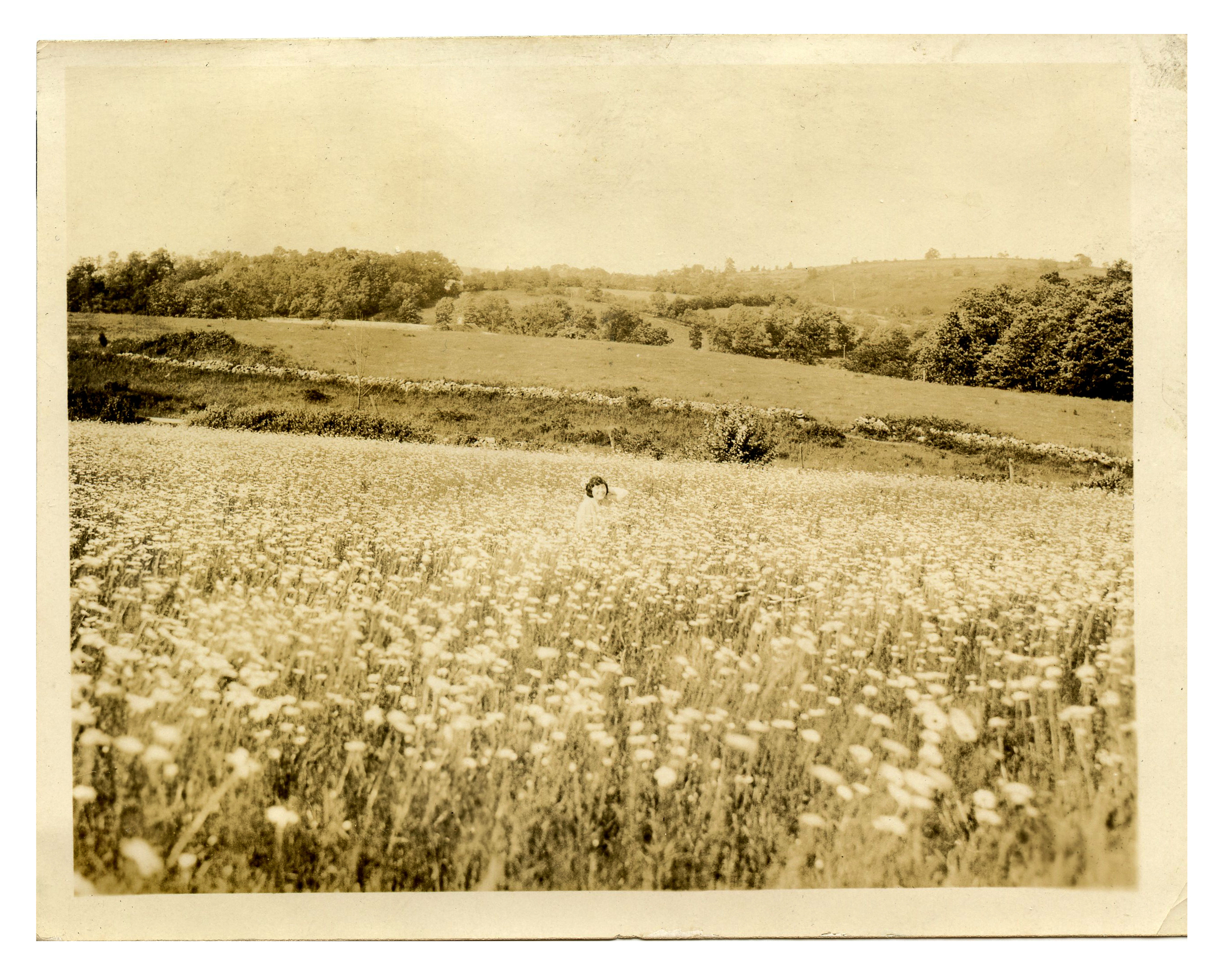A woman immersed in a field of flowers, c. 1940.