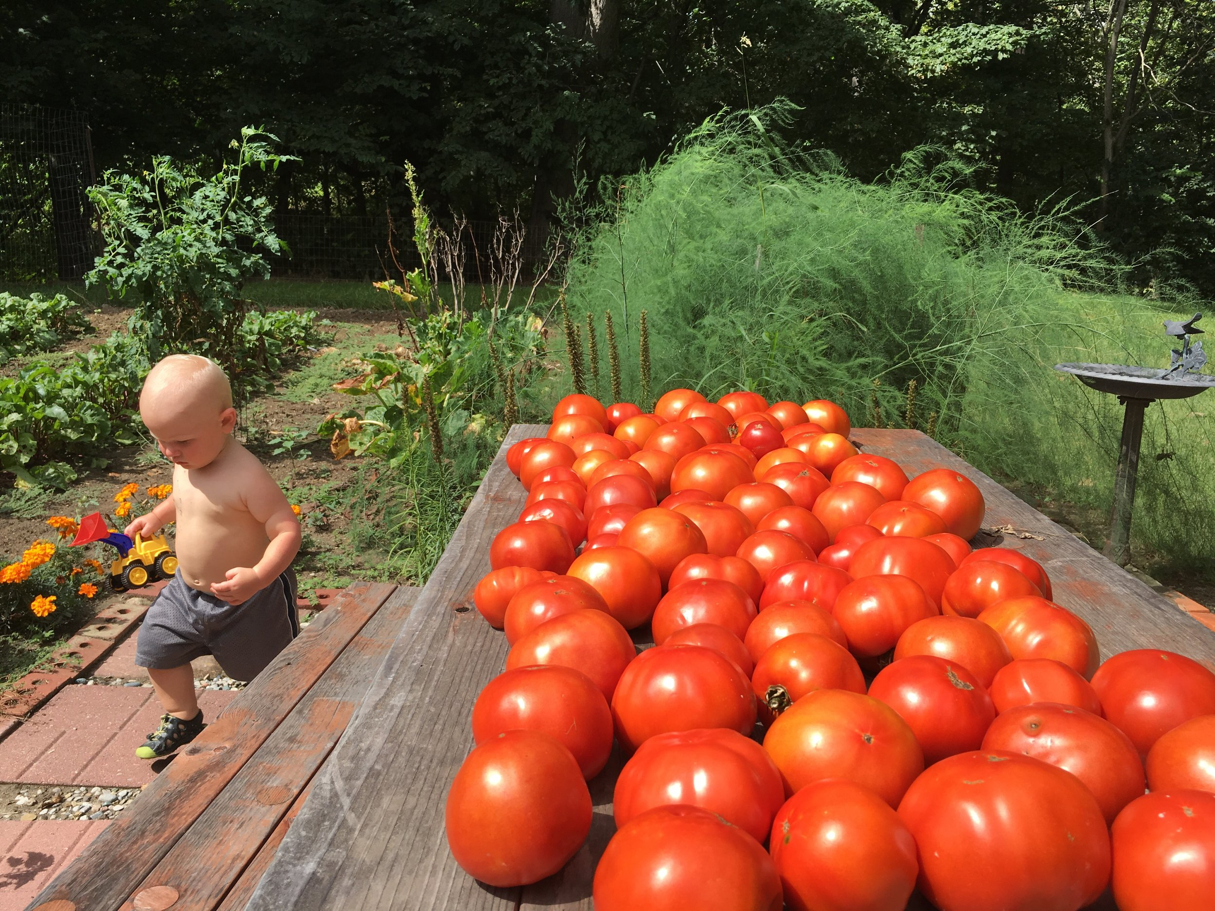 How miraculous and wonderful to experience a mid-summer bounty! *this is not my garden. I can't take credit for those plump, juicy tow-maters