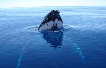 Whale7_lg T2.jpg