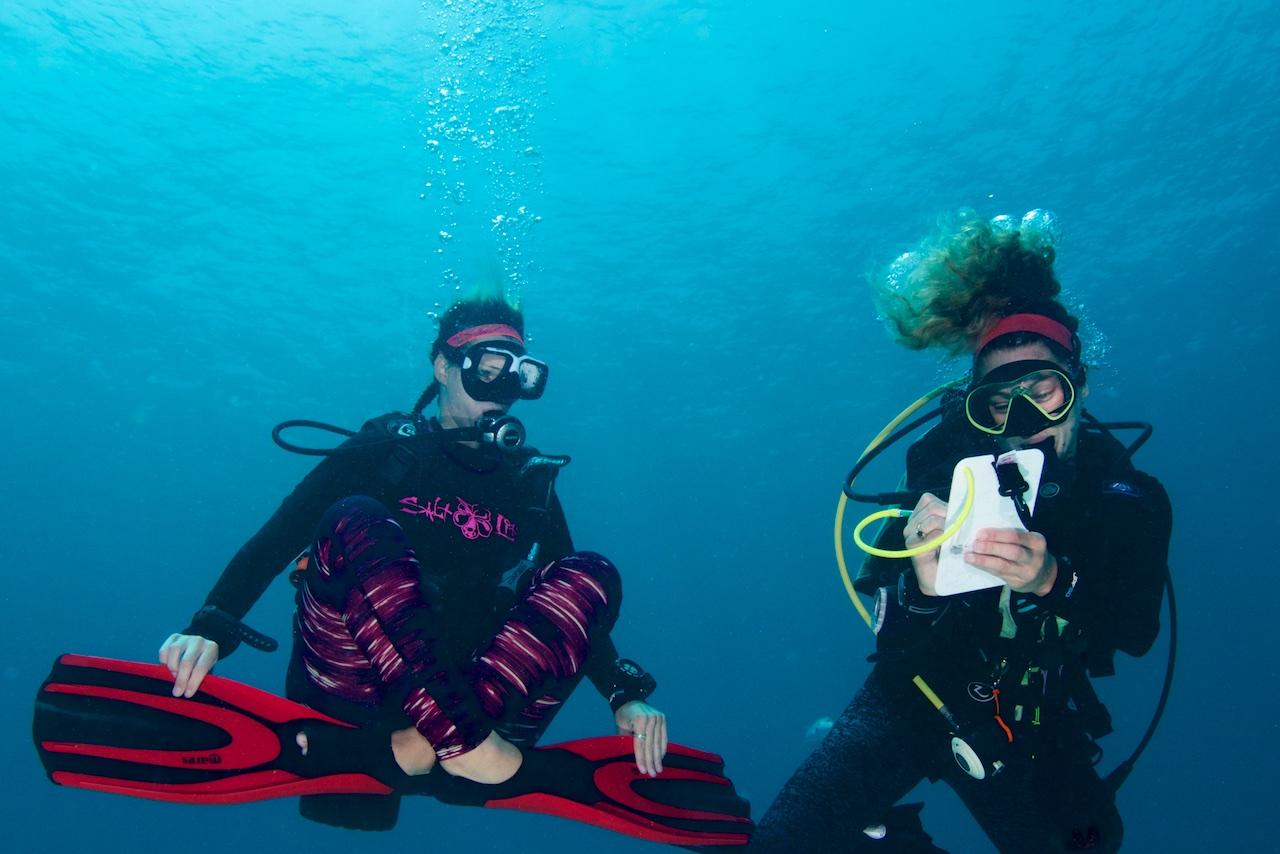 padi open water course dive bermuda learn to dive PADI 5 star.jpg
