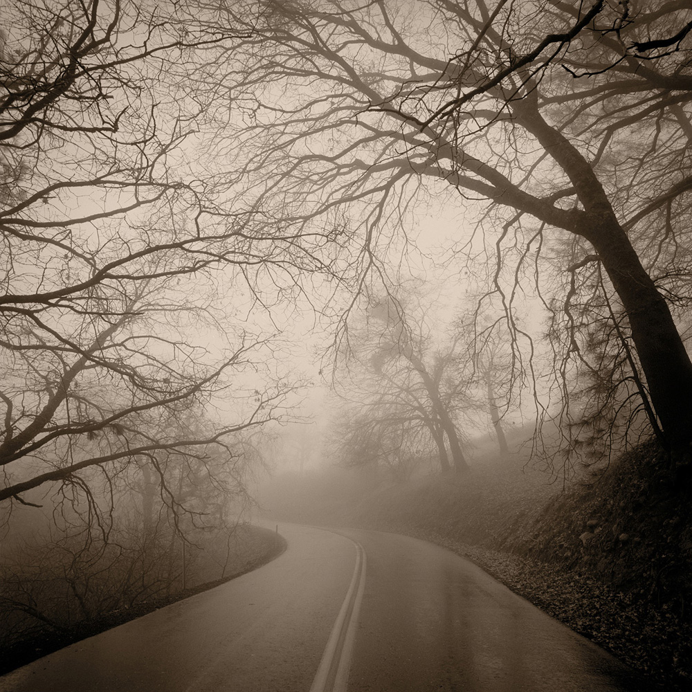 Road, Trees and Fog