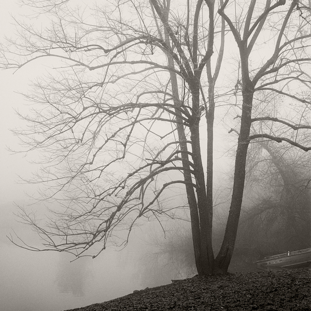 Foggy Pond, Tree and Boat