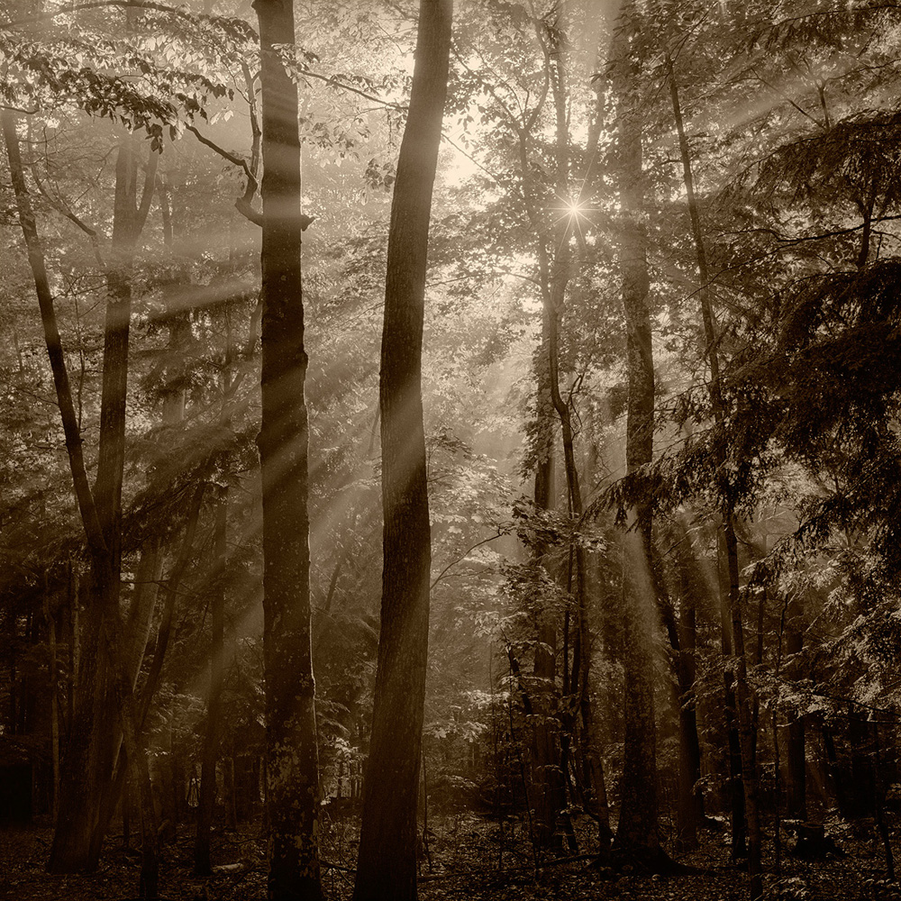 Sun, Fog and Trees, MI