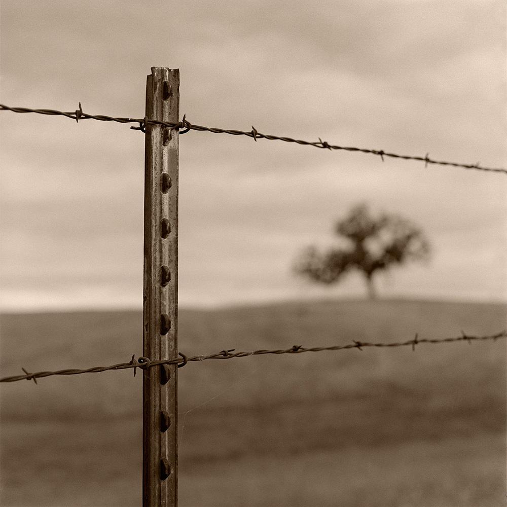 Fence and Tree, Folsom