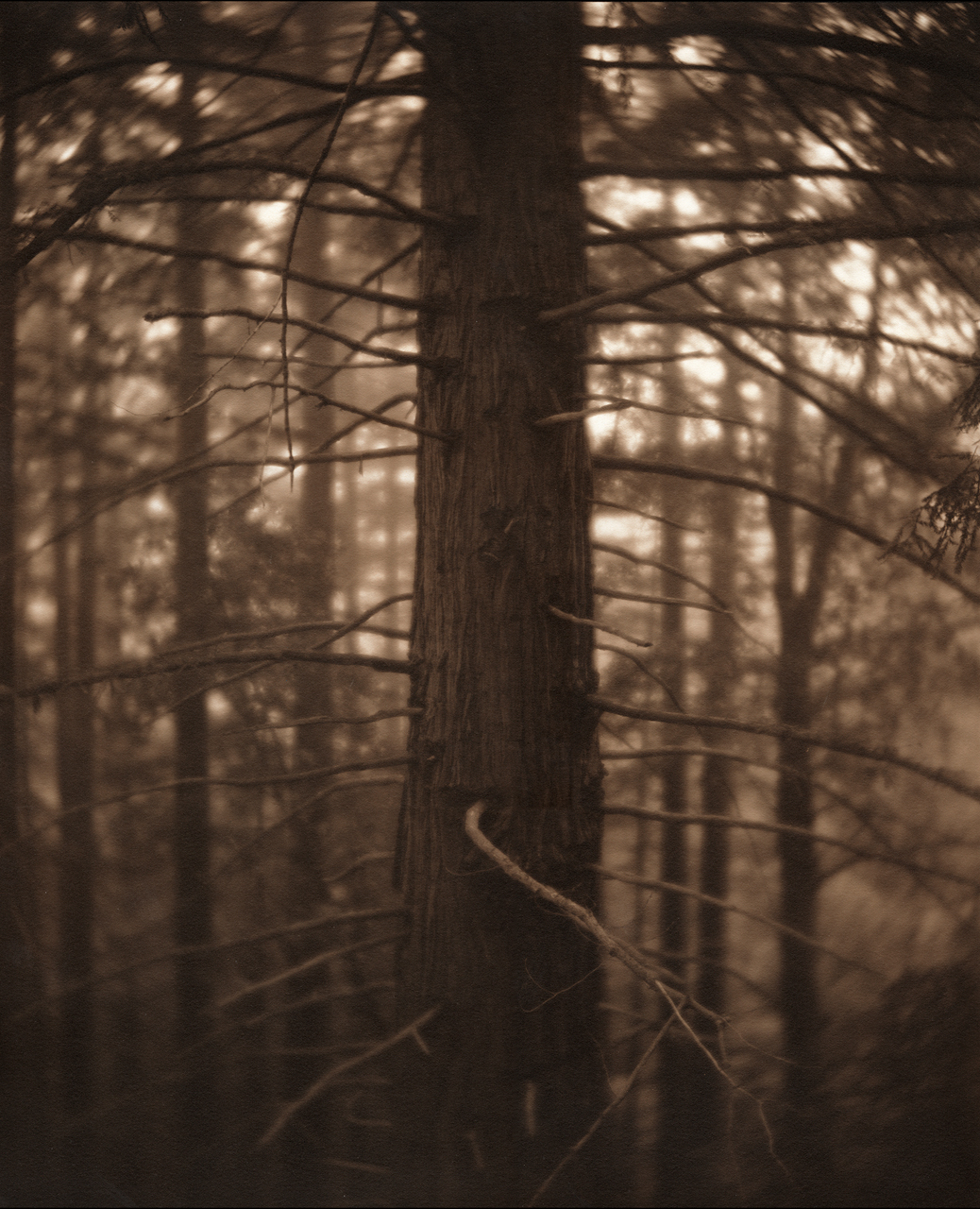Untitled (Soft focus tree).jpg