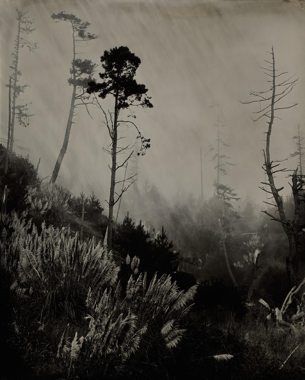 Trees near Gualala, CA
