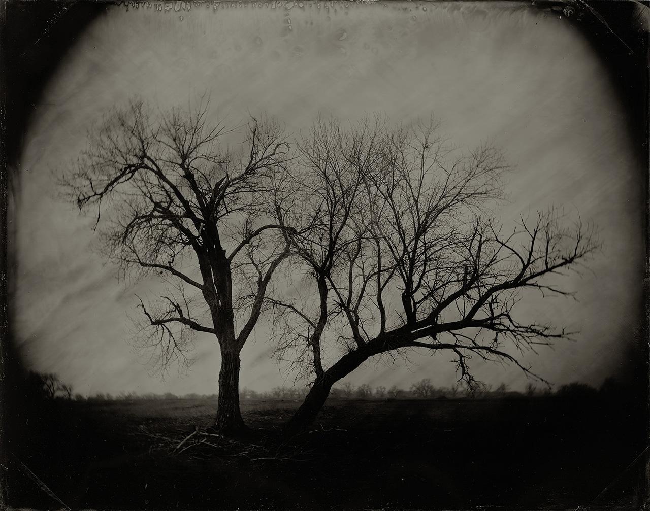 Trees, White Rock Road