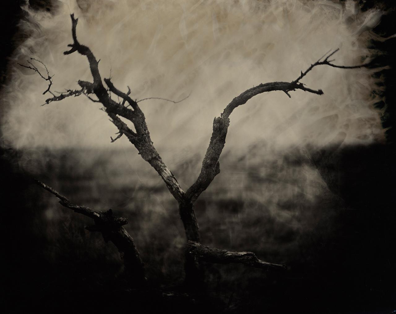 Burnt Tree, Folsom