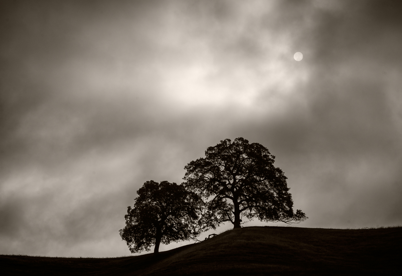 Trees and Sun near Latrobe, CA.jpg