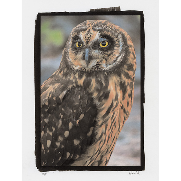 Print 2 - Short Eared Owl, The Galapagos, 2017