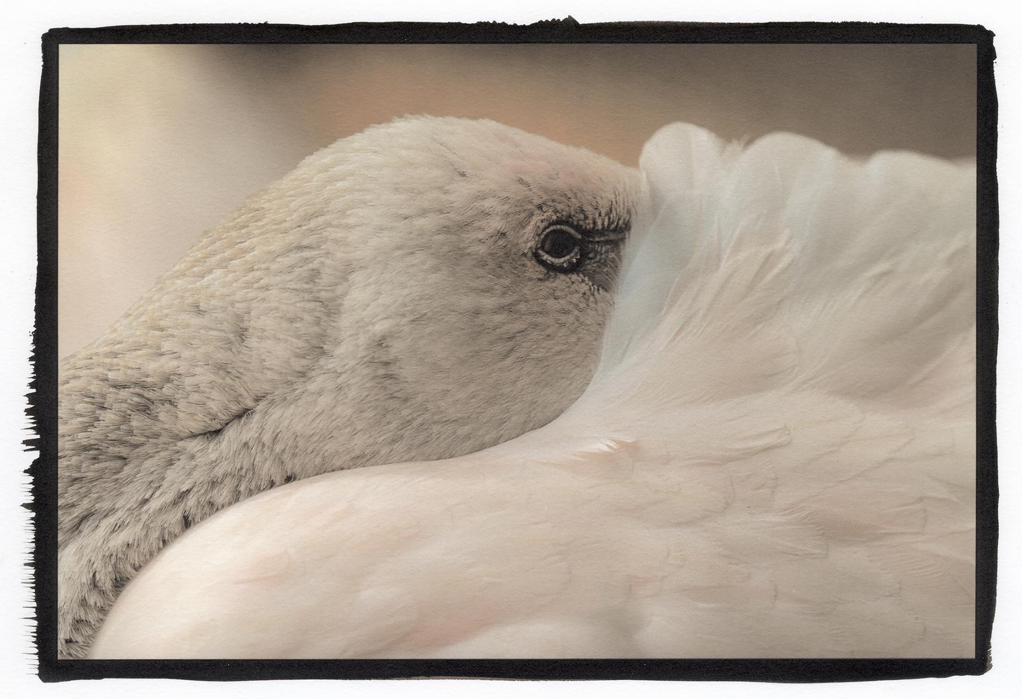 brazil bird 1.jpg