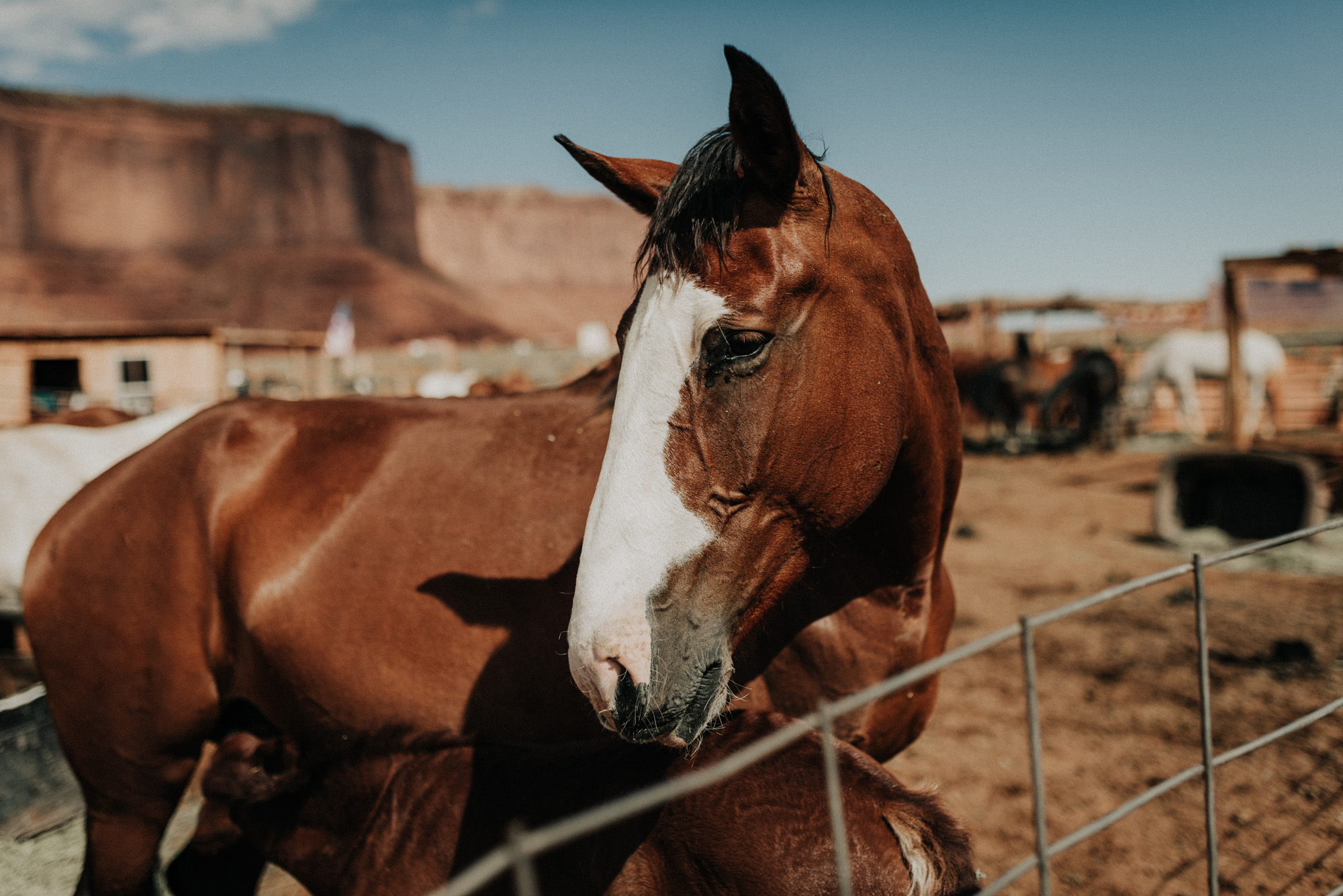 monument valley utah ut kylewillisphoto demurela horses