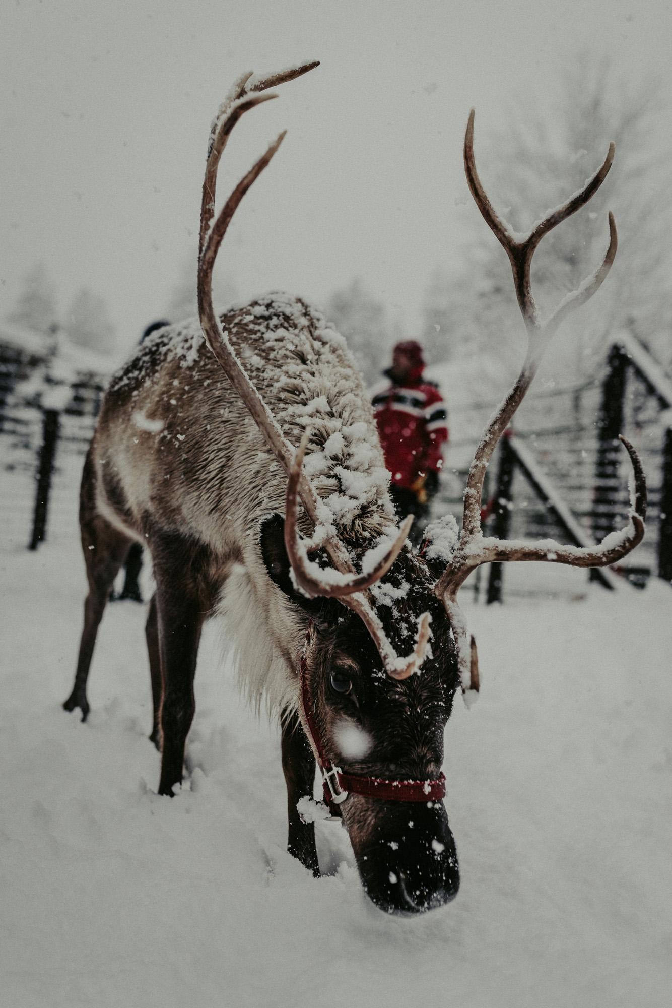 Leavenworth Reindeer Farm KyleWillisPhoto