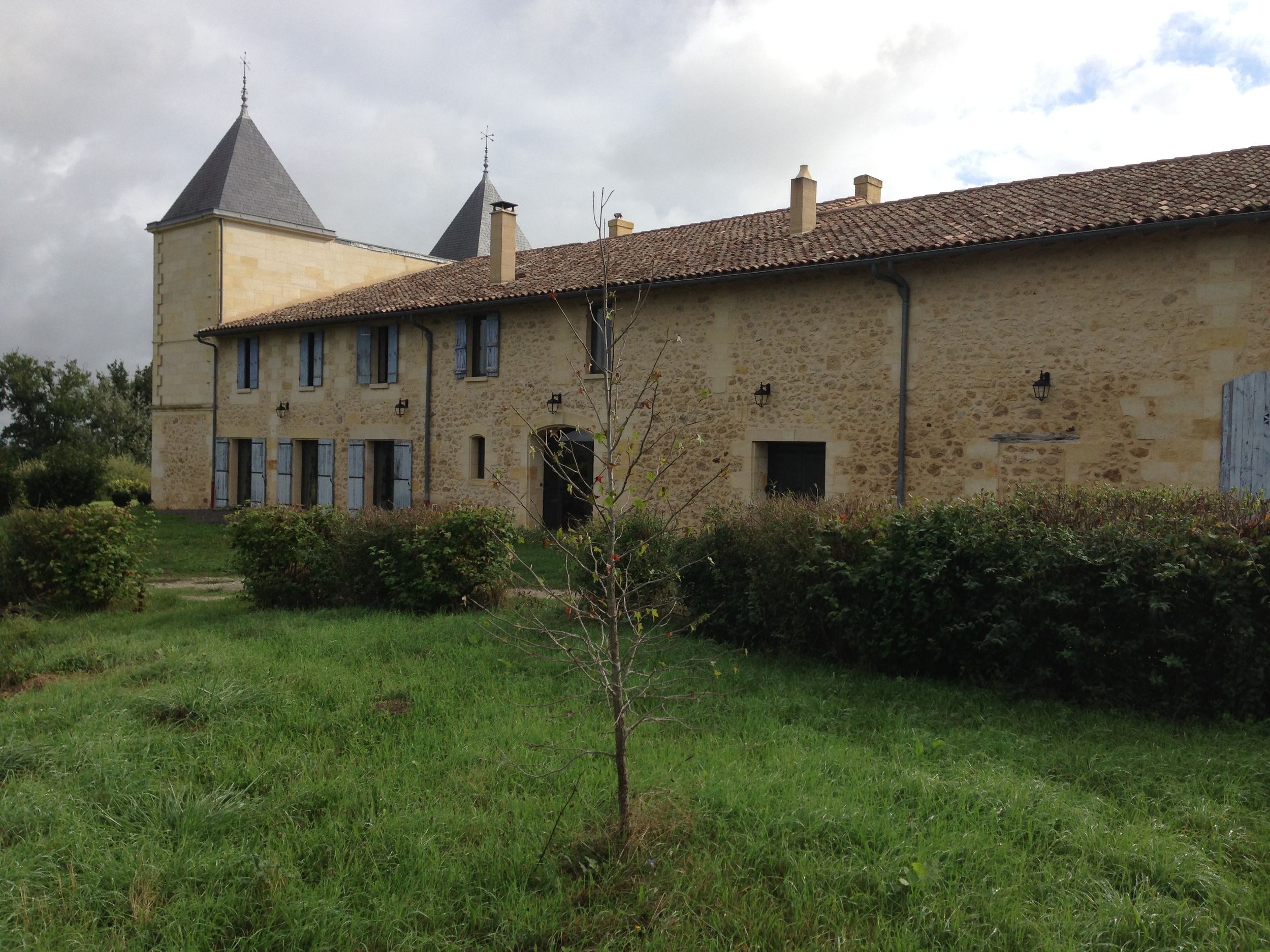 A liquidamber tree planted at Chateau Gastineau, Bordeaux. The home of Ann's lifelong friend, Martine Gougam.